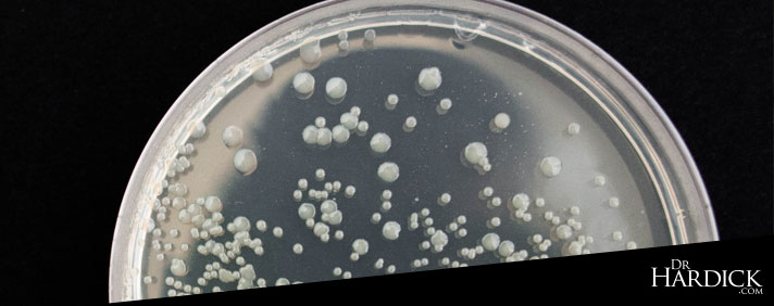 Good and Bad Bacteria - Is There No Such Thing?